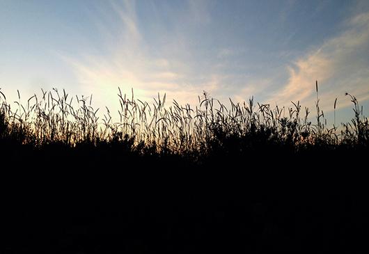 sunset silhouette landscape